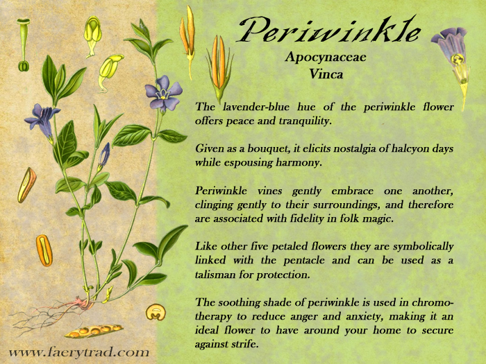 Periwinkle: Apocynaceae; Vinca Minor & Vinca Major - The lavender-blue hue of the periwinkle flower offers peace and tranquility.Given as a bouquet, it elicits nostalgia of halcyon days while espousing harmony. Periwinkle vines gently embrace one another, clinging gently to their surroundings, and therefore are associated with fidelity in folk magic. Like other five petaled flowers they are symbolically linked with the pentacle and can be used as a talisman for protection. The soothing shade of periwinkle is used in chromotherapy to reduce anger and anxiety, making it an ideal flower to have around your home to secure against strife.